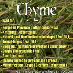 Uses and Benefits of Thyme