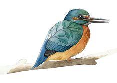 Impresión del arte del pájaro Martín pescador  por AliciasInfinity