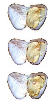 A beautiful series pearl in oyster...Observing a pearl in jewelry is very different from observing it nesting in its oyster...