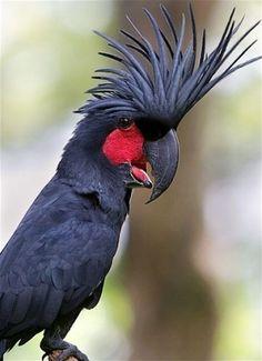 Palm kakadu by frostingwarrior
