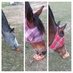 HORSE DIY-Horse Popsicles- cut up some carrots, apples, watermelon rinds or whatever fruit or vegetable your horse likes to eat place them into a Tupperware container fill with water and put it into the freezer until completely frozen. My horses LOVE them, it's a great summer time treat!