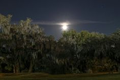 Spanish Moss hangs from trees on a Florida evening.  Long Exposure photography.