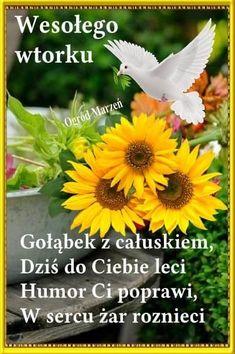 Good Morning, Humor, Plants, Buen Dia, Bonjour, Humour, Funny Photos, Plant, Funny Humor