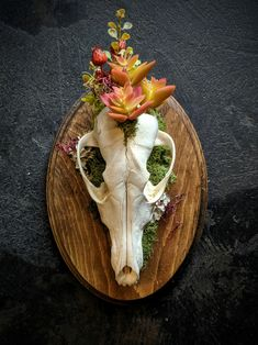 Decorative Real Coyote Skull on Wood Plaque. Deer Skull Art, Coyote Skull, Skull Decor, House Furniture Design, Chair Design, Design Design, Modern Furniture, Skull Crafts, Bone Crafts