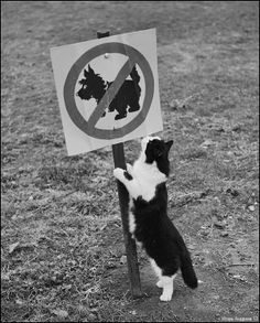 Bill✔️.   No dogs, but cats are okay!  Cats always think they're special, don't they just!   Bill Gibson-Patmore. (curation & caption: @BillGP). Bill✔️