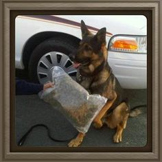 K9 - Job Well Done!