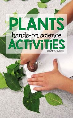 Plant life cycle activities for kids-Hands on science activities perfect for and grade students to learn about plant needs adaptations photosynthesis pollination and more. Plant Experiments, Plant Science, Science Experiments Kids, Earth Science, Life Science Projects, Science Activities For Kids, Sequencing Activities, Nature Activities, Kindergarten Science