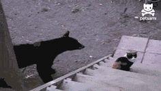 Go Away Bear, I'm A Cat