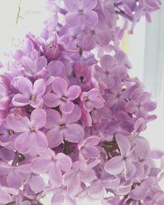 fabulous vancouver florist Lilacs always killin' it. by @blossomandvinefloralco  #vancouverflorist #vancouverflorist #vancouverwedding #vancouverweddingdosanddonts