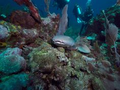 Photo - Google Photos Belize Diving, Aquarium, Photo And Video, Pets, Google, Animals, Goldfish Bowl, Animales, Animaux