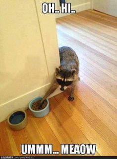 I love raccoons!