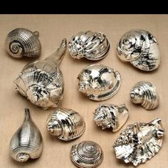 Paint seashells with chrome spray paint. Such a cute easy idea
