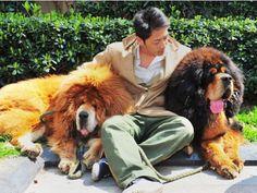 Hond verkoop vir miljoene in China