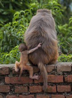 Hanging onto mum