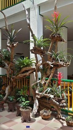 Looks like the jungle in peru with giant bromeliads clinging to the trees bromeliads clinging giant greatindoors jungle peru treesUnique Kokedama Ball Ideas for Hanging Garden Plants selber machen Finest Succulent Garden Concepts Around The Wo Orchid Planters, Orchids Garden, Succulents Garden, Garden Plants, House Plants, Driftwood Planters, Driftwood Crafts, Air Plants, Indoor Plants