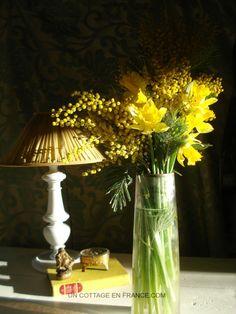 Le bouquet de jonuilles et de mimosas du cottage
