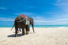 Ride and elephant in Phuket, Thailand. Oh The Places You'll Go, Places To Visit, Thailand Elephants, Adventure Is Out There, Adventure Time, Summer Pictures, Dream Vacations, Vacation Spots, Beautiful World
