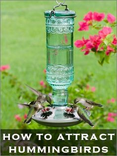 How To Feed & Attract Hummingbirds