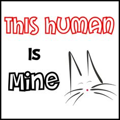 This Human Is Mine   #cats #gatos #gatetes #catslovers #catlover #love #amor #meow #miau #human