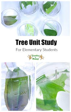 Learning about trees? This tree unit study is designed to help elementary students learn everything they need to know about trees and photosynthesis!