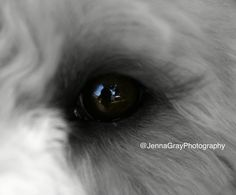 My puppy, Charlie's eye Puppies, Eyes, Photography, Cubs, Photograph, Fotografie, Photoshoot, Pup, Cat Eyes