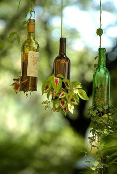 Wine bottle hanging garden