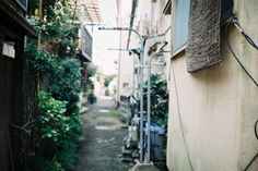 | FUJI COLOR 100 | instagram | Kunihito Miki Photography |