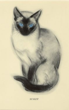 "Vintage Cat Print Siamese Cat by Clare Turlay Newberry C. 1937 Vintage Decor Matted 9x12"" Bookplate"