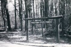 The World's 7 Most Haunted Forests | moviepilot.com Freetown State Forest, Massachusetts Part of the Bridgewater Triangle area known for a bevy of paranormal activity, the Freetown State Forest is where most of the haunting occurrences take place. Its haunted status goes all the way back to colonial times, when settlers purchased the land from the Wampanoag Tribe. This deal was dicey at best because the Native Americans believed the forest to be sacred (housing multiple American Indian…