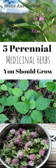 Stone Axe Herbals: 5 Perennial Medicinal Herbs You Should Plant This Spring