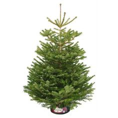 Non Drop Christmas Trees from Pines and Needles are perfect for your home and can be delivered, installed and decorated across London and other towns