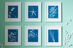 Easy and classic cyanotypes    Google Image Result for http://media.tumblr.com/tumblr_m8rc3ey70A1qcmo46.jpg