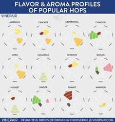 INFOGRAPHIC: Flavor and Aroma Profiles of Popular Hops