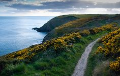 Ardmore Cliff Walk (Ireland). 'Marvellous 5km walk from an ancient Christian well across sea cliffs to Ardmore town.' http://www.lonelyplanet.com/ireland/county-waterford/ardmore