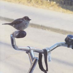 Birds love my bike sculpture #bicycle #bird #spring
