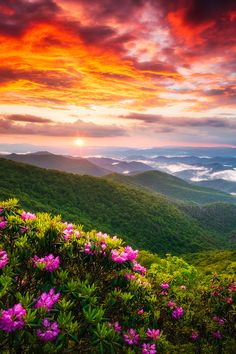 Appalachian Mountains Spring Flowers Sunset Landscape Photography Prints & Wall Art For Home Decor