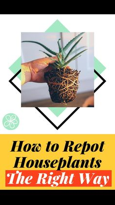 Potted Plants Patio, Water Plants, Indoor Plants, Planters, Growing Succulents, Planting Succulents, Gardening For Beginners, Gardening Tips, Apartment Balcony Decorating