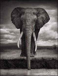 This elephant, named Igor, photographed in Amboseli National Park in Kenya in 2007, was slaughtered by poachers in 2009. Photo by wildlife activist and photographer Nick Brandt.