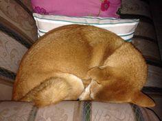La Kumiko perrogato se hace Bolita y se pone a roncar