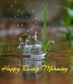 Looking for for images for good morning handsome?Browse around this website for very best good morning handsome ideas. These enjoyable quotes will brighten your day. Rainy Morning Quotes, Good Morning Rainy Day, Good Morning Funny, Good Morning Sunshine, Good Morning Picture, Good Morning Greetings, Good Morning Wishes, Rainy Days, Morning Memes
