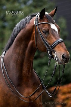 Equigeniek Paardenfotografie