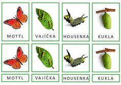 Třísložkové karty podle modelů Safariology. Life Cycles, English Grammar, Montessori, Plant Leaves, Insects, Teacher, Education, Spring, Animals
