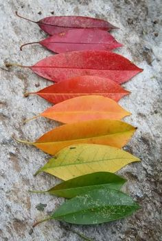 who knew that you could create such a lovely rainbow of leaves?