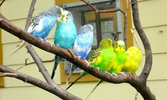 Parakeets have personality.I had a yellow one named Pebbles.My sister had a blue one named Alexander
