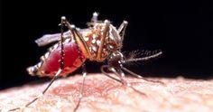 Pesquisadores da UFRJ mapeiam genoma do Zika