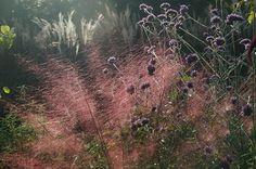 1000 images about plantation vegetation on pinterest grasses tuin and landscape architects. Black Bedroom Furniture Sets. Home Design Ideas