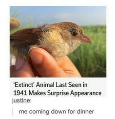 surprise appearance