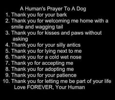 To Rosie Gonzales.my best friend. Prayer to your dog! Thank you, writetowag, for sharing this! Schnauzers, Chihuahuas, Schnauzer Puppies, Pomeranians, Dog Quotes, Animal Quotes, Dog Sayings, Quotes About Dogs, I Love Dogs