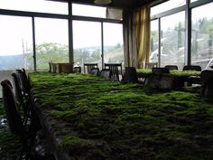 Mossy table tops at an abandoned hotel in Japan. .