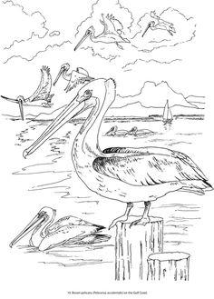 Bird migration coloring pages ~ Dino Dan cartoon brontosaurus Jurassic period dinosaurs ...